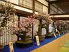 大盆梅展2009_1.jpg