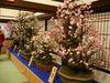 大盆梅展2009_3.jpg