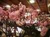 大盆梅展2009_7.jpg