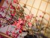 大盆梅展2009_8.jpg