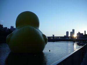 Rubber Duck_9.jpg